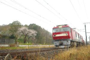 Eh500__sakura