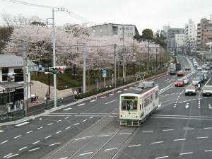 Sakura_hukushu_02