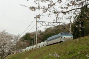 Sakura_hukushu_05