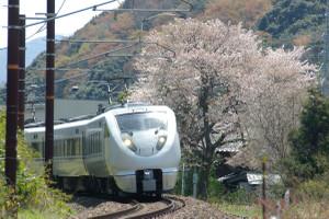 Sakura_hukushu_12