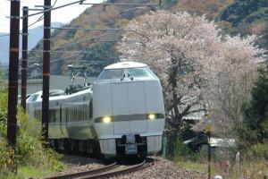 Sakura_hukushu_13