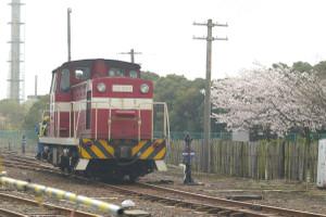 Sakura_hukushu_19