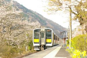 Sakura_hukushu_20