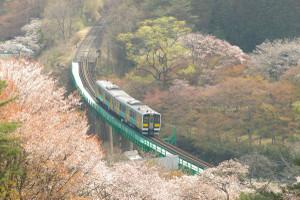 Sakura_hukushu_21