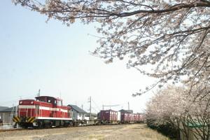 Sakura_hukushu_25