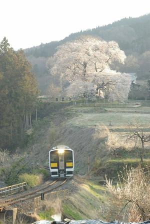 Sakura_hukushu_26_2