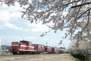 Sakura_hukushu_28