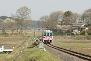 Sakura_hukushu_31