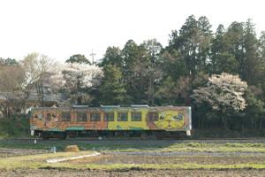 Sakura_hukushu_32