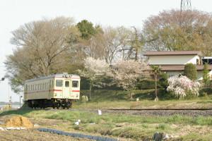 Sakura_hukushu_33