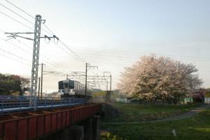 Sakura_hukushu_34