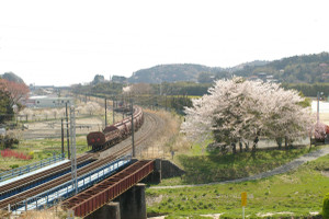 Sakura_hukushu_38