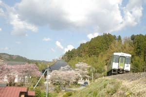 Sakura_hukushu_39