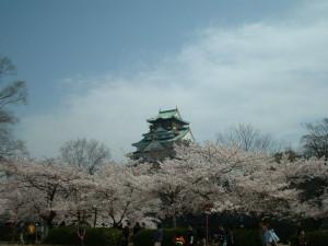Sakura_hukushu_41